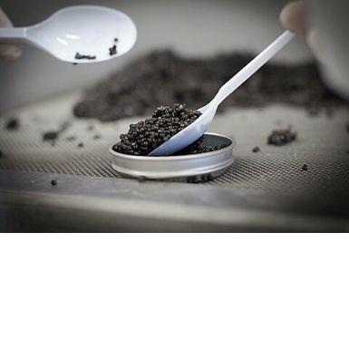 Caviar en Nouvelle-Aquitaine