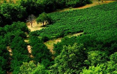 Vignerons des Côteaux du Céou